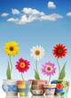 Fun daisies in pots