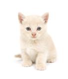 Shy yellow kitten on white background poster