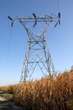 Electrical Towers and Corn poster