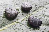 Wet river rocks on a leaf, lastone therapy poster