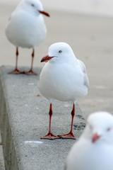 3 Seagulls..