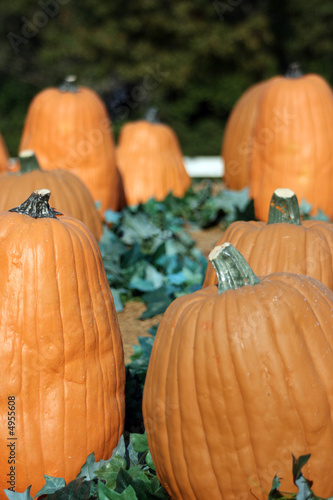 Fall Pumpkin Patch