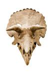 crâne de dinosaure poster