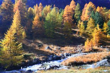 Alpine wood