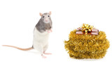 Rat and new year poster