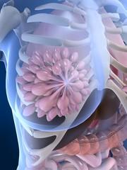 anatomie der weiblichen brust