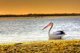Fototapeta woda - jezioro - Ptak
