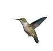 Flying Hummingbird isolated on white.