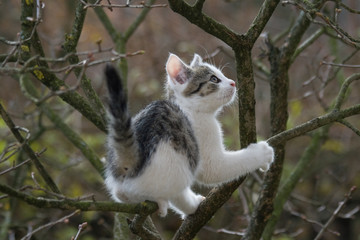 kit on tree