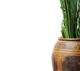 Greenery in a vase. poster