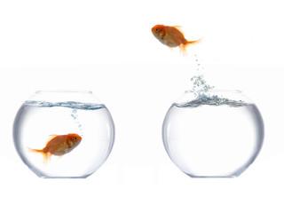 Jumping golden fish I