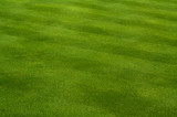 Lush Green Grass on the Golf Course. poster
