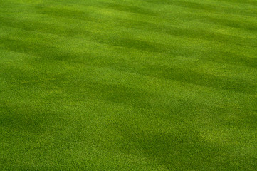 Lush Green Grass on the Golf Course.