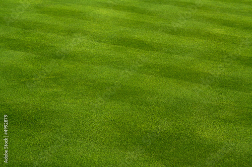 Lush Green Grass on the Golf Course. - 4992879