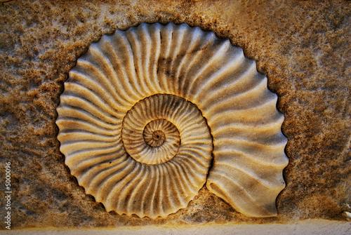 Beautiful seashell - 5000096