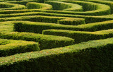 Complex hedge maze poster