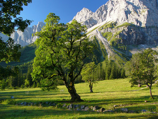 Trees und moutains