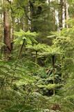 Rainforest Treeferns poster