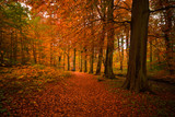 Fototapety autumn in the forest