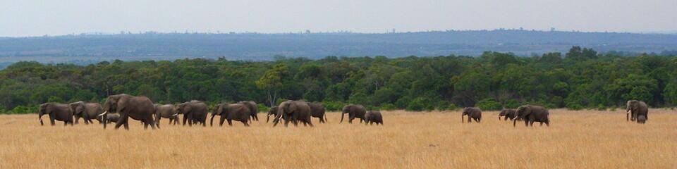 Elefantenherde2