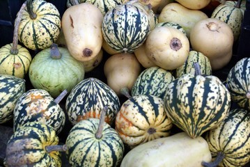 vegetables. selection of gourdes, squashes, & marrows.