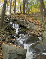 Woodlands and Falls