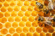 bees on honeycells - 5047889