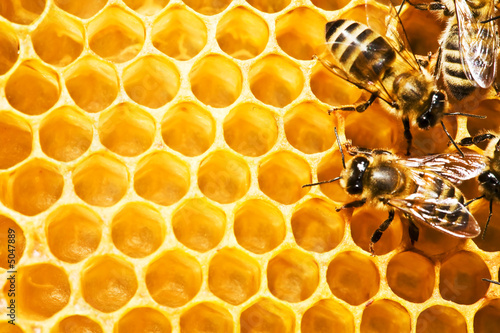 Foto op Aluminium Bee bees on honeycells