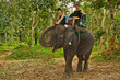 Elephant Trekking in Thai Jungle