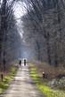Spaziergang durch den Wald