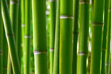 Bamboo forest - Fine Art prints