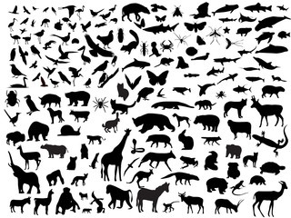 Many vectors of animals