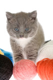 grey kitten and some ball of yarns poster