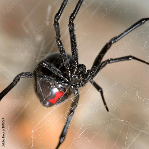 Black Widow - 5079049