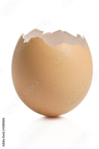 Foto op Canvas Kip Empty eggshell against white background