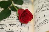 Rote Rose und Musiknoten