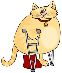 Cat On Crutches