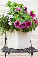 Summe flower tub