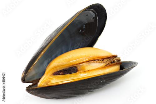 Plexiglas Schaaldieren Mussel