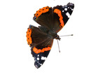 Red admiral isolated on white poster