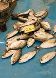 Small Fish For Sale poster