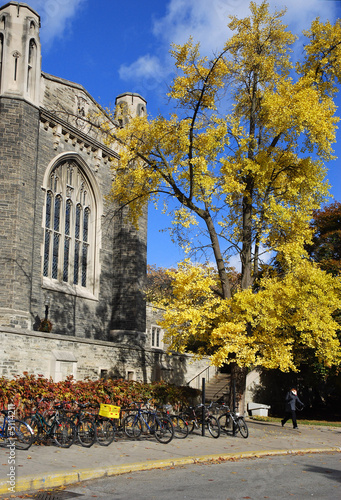 golden leafed tree and gothic university building