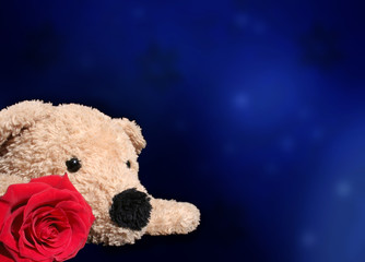 Bear with rose on dark background