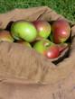 Äpfel in einem Sack