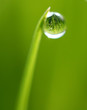 Droplet on green grass