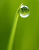 Fototapeta mokry - woda - Roślinne