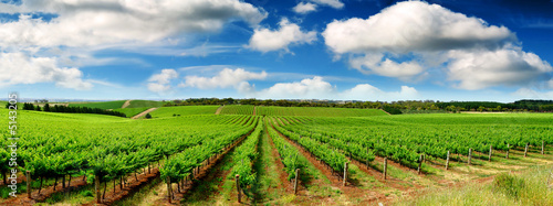 Green Vineyard Landscape