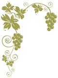 Fototapety tralcio di vite con grappoli d'uva