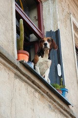 Dog looking from the window with plants in the pots
