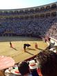 Toros en Las Ventas - 5153480